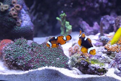 Oświetlanie Akwarium W Ciągu Dnia I Nocą Monika Szot